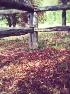 Autumn leaves and fence