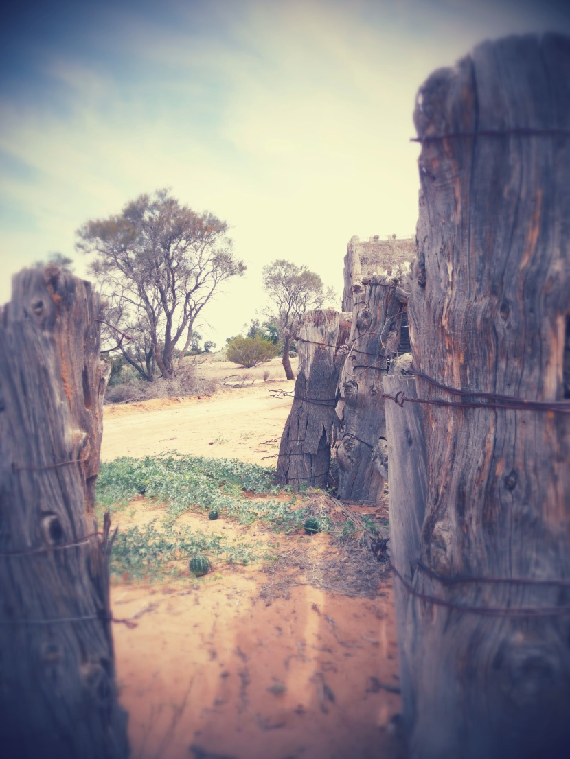 Walking back in time at Mungo National Park