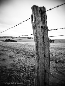 Fencepost and paddock
