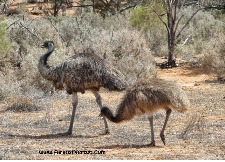 Emus WM