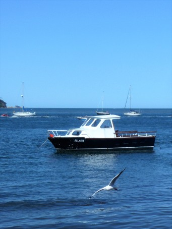 Boat and seagull