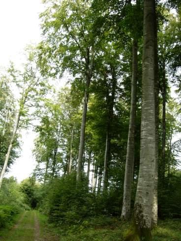 European forest