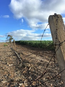 Fencepost and crops